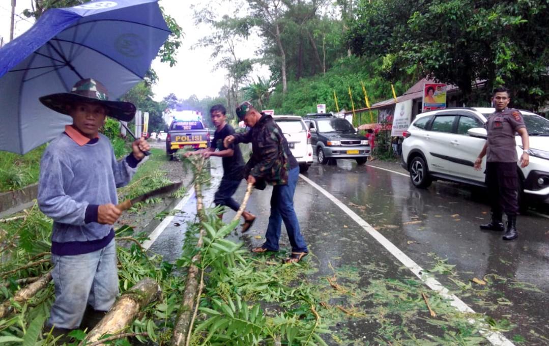 Hujan Deras Disertai Angin Kencang Tumbangkan Pohon di Jalan Poros Makale-Rantepao