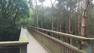 Salcey Forest Treetop Walk Family Day Out in Northamptonshire