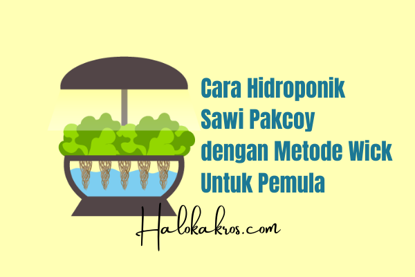 cara-hidroponik-sawi-pakcoy-metode-wick
