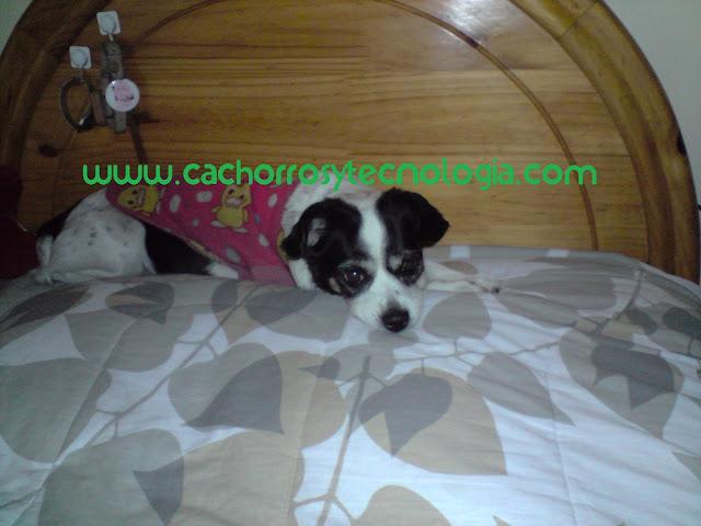 Cachorra 22 años larga vida perro can dog long life cachorros y tecnologia