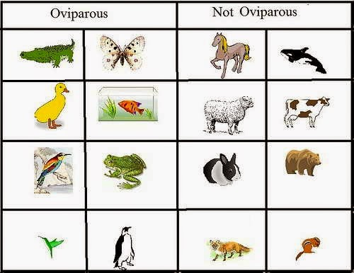 Oviparous and Viviparous Animals, Science Cbse / Ncert Revision Notes, Class 8