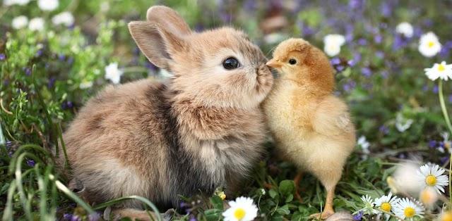Melhores nomes para coelhos