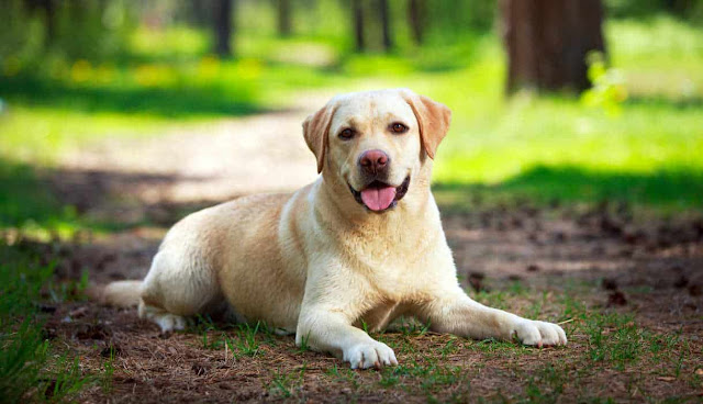 German Man Develops Fatal Infection After Being Licked By His Dog - rictasblog.com