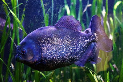 Homemade Fish Food: Make Best Fish Food For Growth of Your Fish