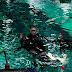 Uma experiência incrível: Mergulho de flutuação no AquaRio