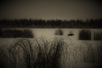 Frozen lake and reeds