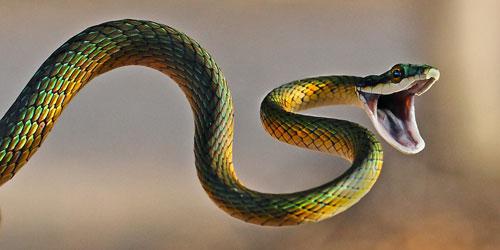 Snake SIXTH-SENSE
