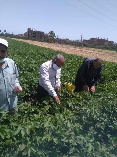 زراعة الفيوم تتابع محصول القطن بالمراكز