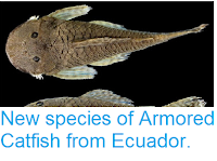 http://sciencythoughts.blogspot.co.uk/2012/03/new-species-of-armored-catfish-from.html
