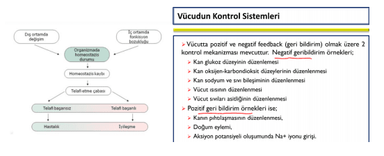 Fizyolojinin tarihi mekanizması