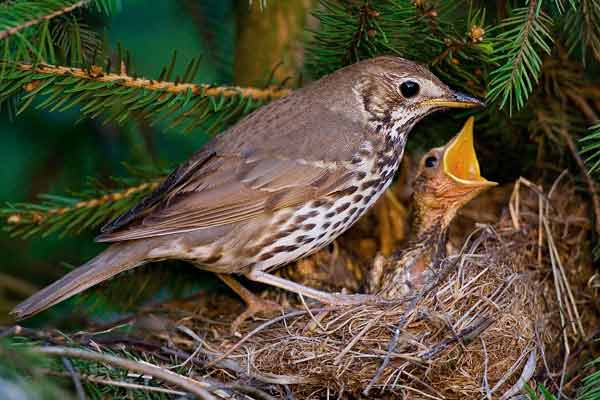 Pássaro e sua prole