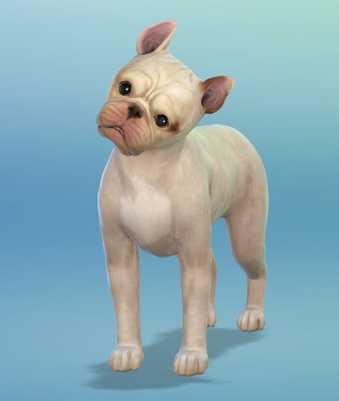 The Sims  Cats Dogs French Bulldog