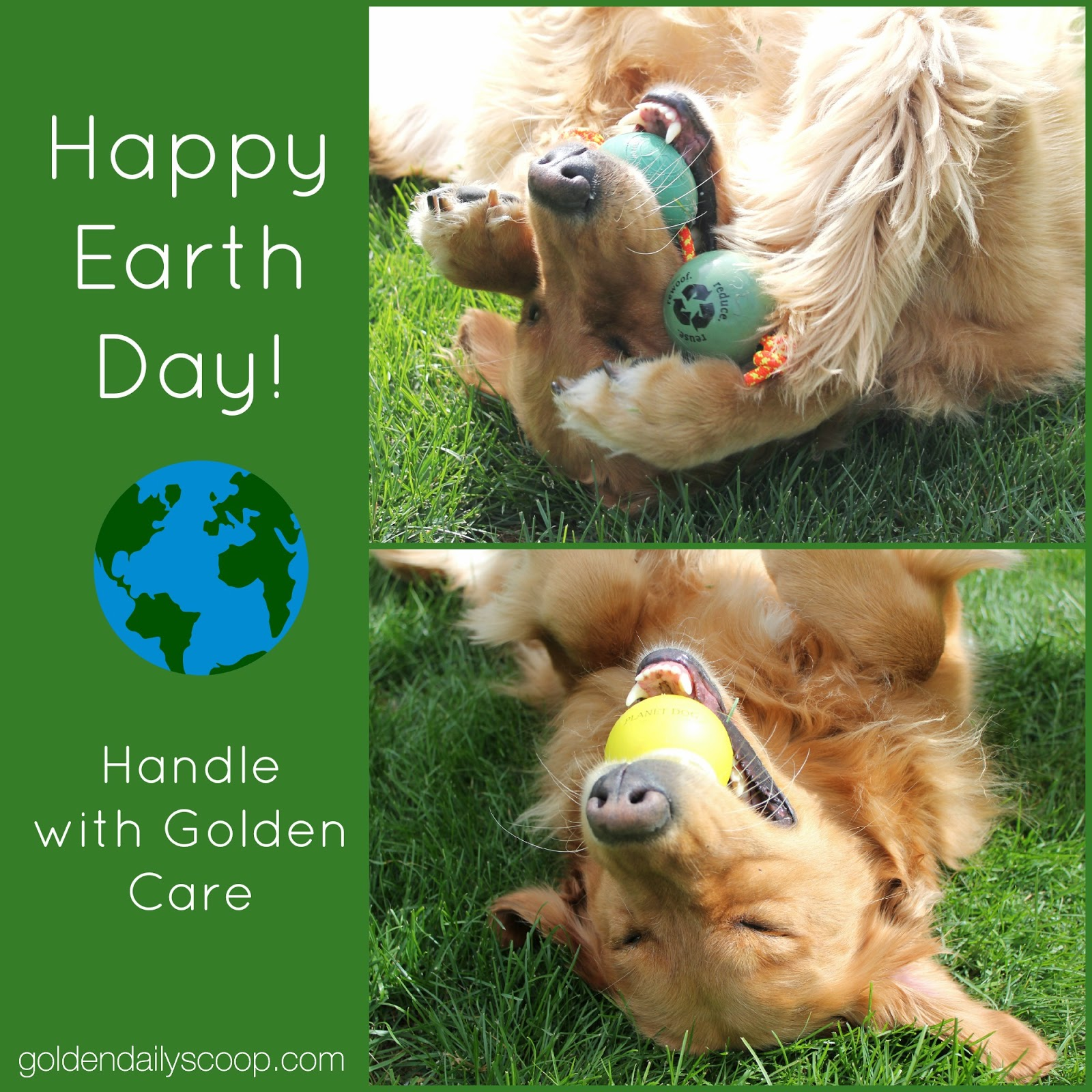 dog playing with planet dog ball in grass on earth day