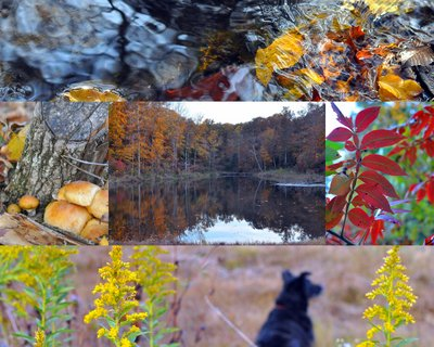 Fall Color in the Missouri Ozarks