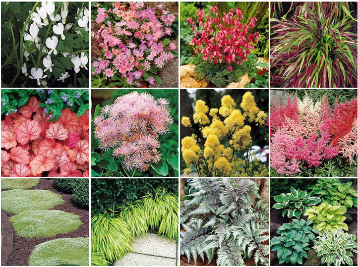 Image Result For Shade Loving Plants Zone B