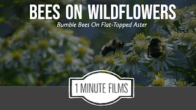 Bumble Bee Film