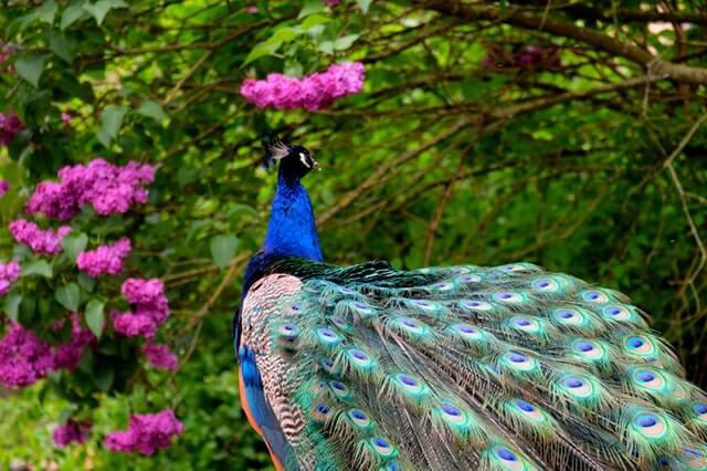 Animal Beautiful Bird Blue HD Copyright Free Image
