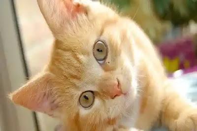 رؤية القطط في المنام للحامل