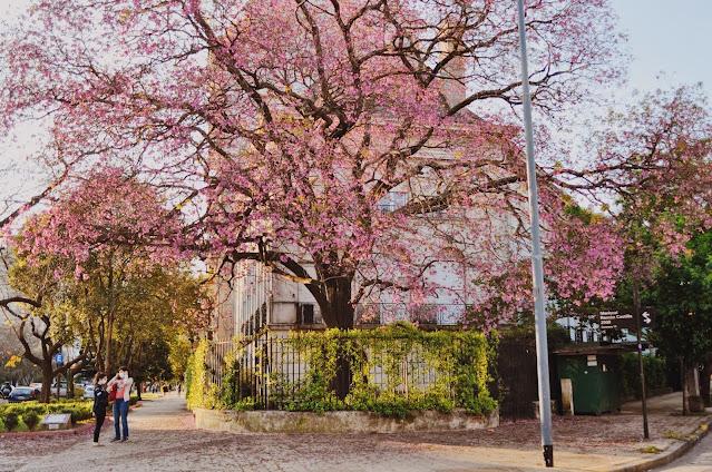 Barrio Parque -  Las 14 calles más lindas de Buenos Aires