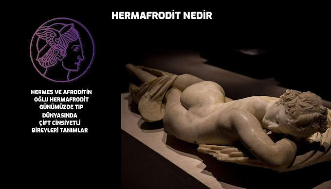 Hermafrodit nedir Cinsel yönelimleri nedir