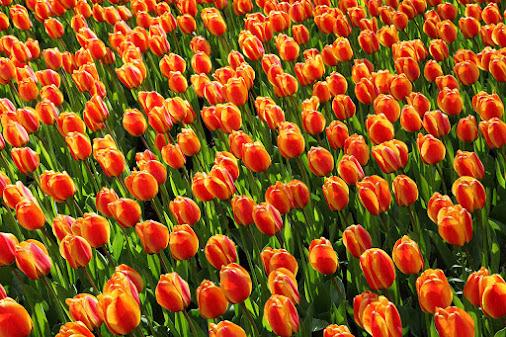 صور زهور ورق حائط 17