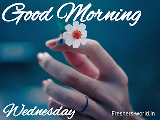 good morning wednesday image || Good morning on Wednesday