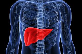 7 Fungsi Utama Organ Hati ( Liver ) Pada Manusia