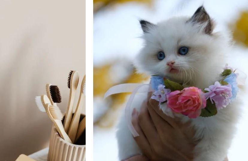 Comment prendre soin les dents du chat : hygiène et conseils