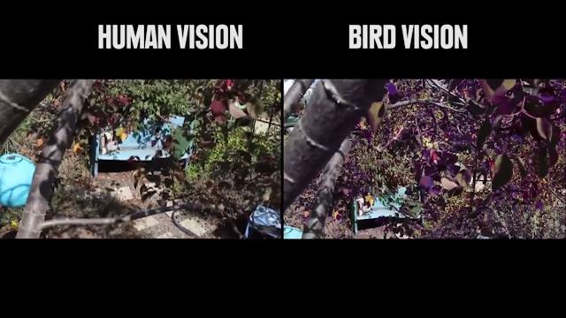 Penglihatan Burung