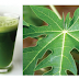 This Papaya Leaf Juice was having many benefits this is the reason why you need to drink this.