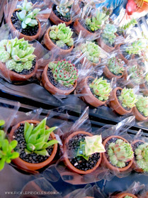 Mini succulent wedding favours.