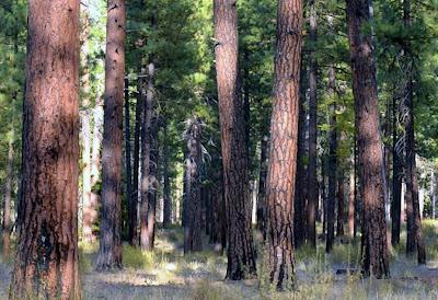 भारत के वनों का वर्गीकरण