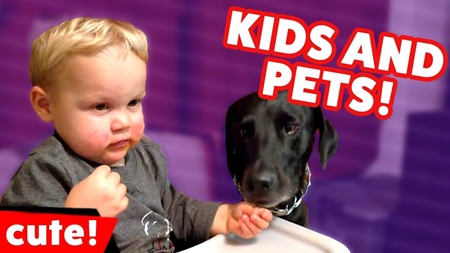 Funniest Cute Kids & Pets Home Video Bloopers Caught On Tape Weekly Compilation