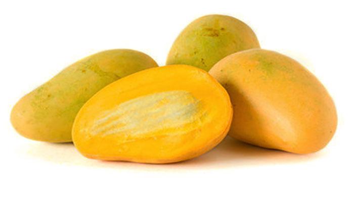 health benefits of mango,benefits of mango,benefits of mango seed oil,health benefits of mango seeds, mango tree,
