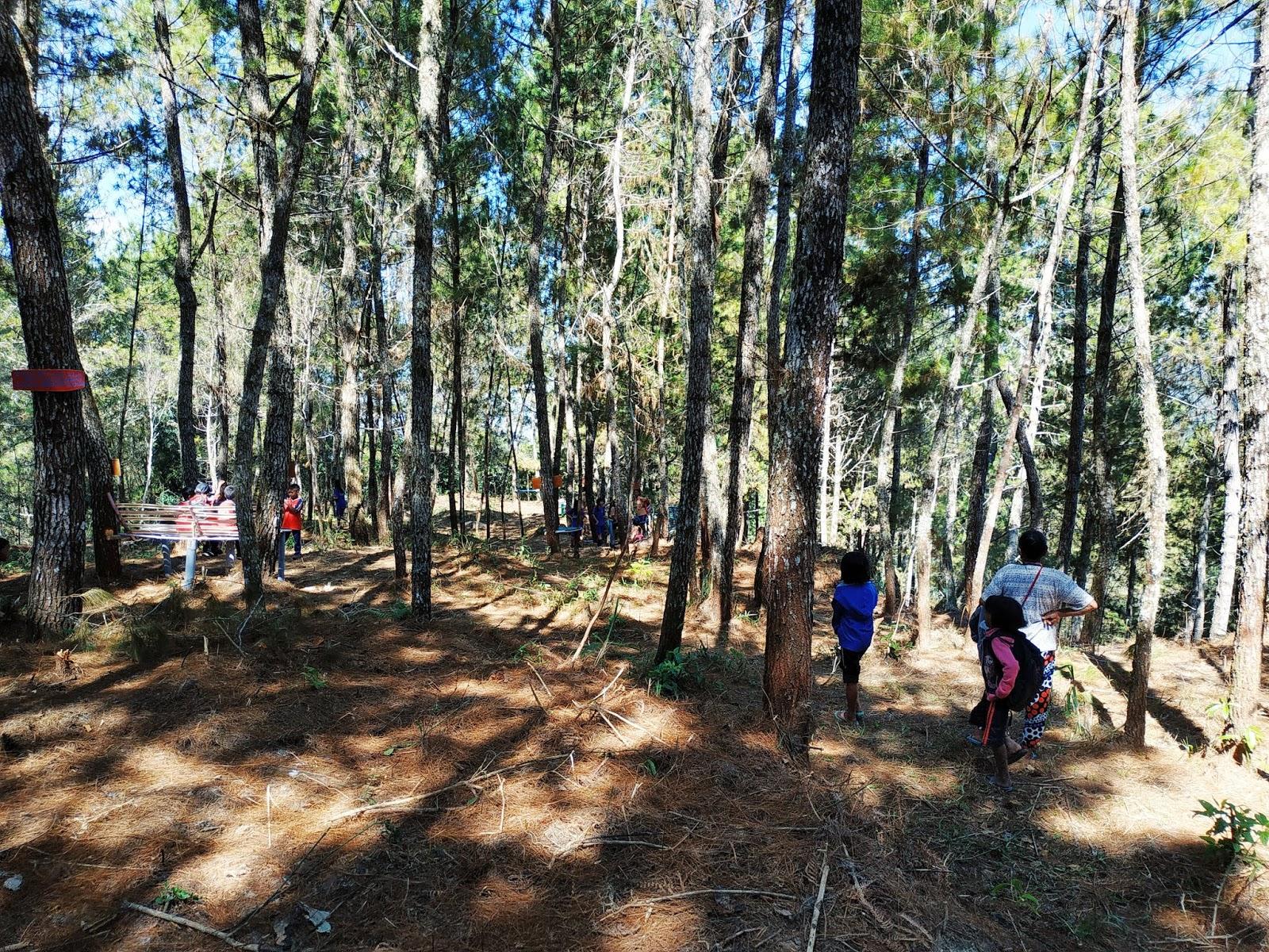Wisata Baru Hutan Pinus Paonganan