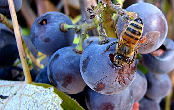 Μελισσοκομικοί χειρισμοί Σεπτεμβρίου