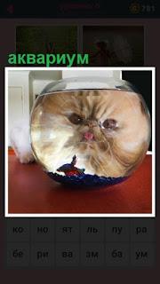 651 слов видна морда кошки через аквариум 6 уровень