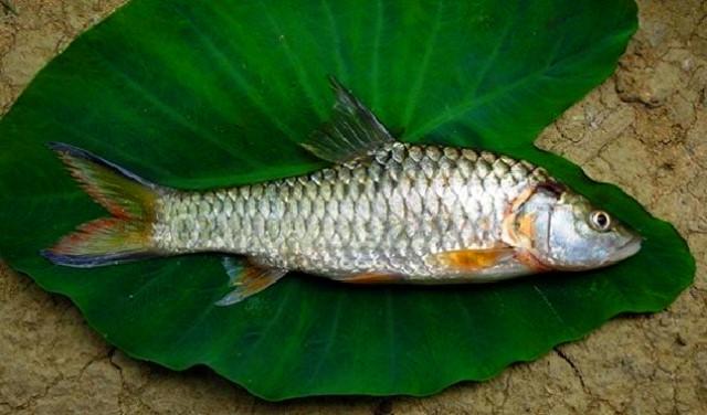Mancing ikan kecil