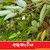 අතුකැටිය (Xylopia Parviflora)