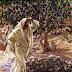 La Maldición de la Higuera (Mateo 21:18-22)