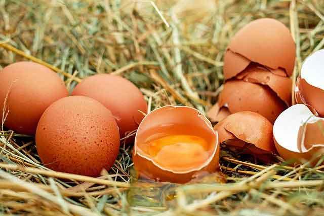 هل يمكنك أكل البيض الذي يحتوي على نقطة دم؟