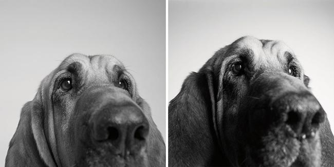 Dog Years Pictures Of Aging Dogs That Will Make Dog Lovers Cry - Copper: Three years and 10 years.