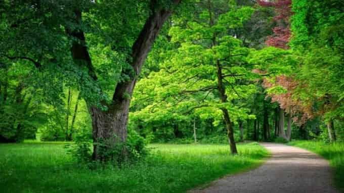 Forest and Natural Vegetation of Uttar Pradesh