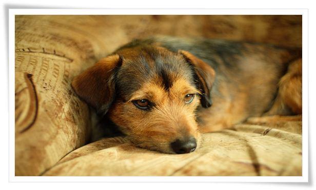 housebreaking dog meaning