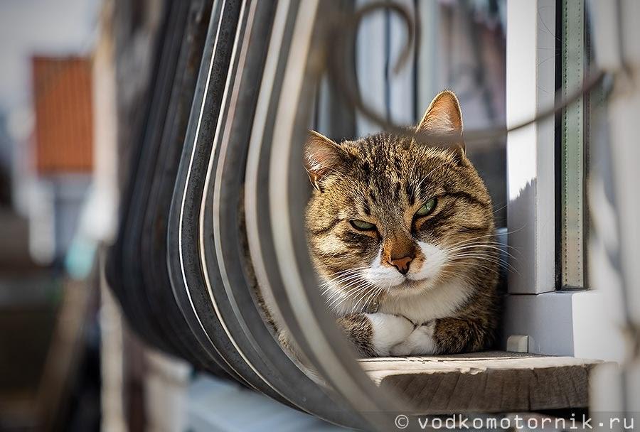 Кот Шмель скучает