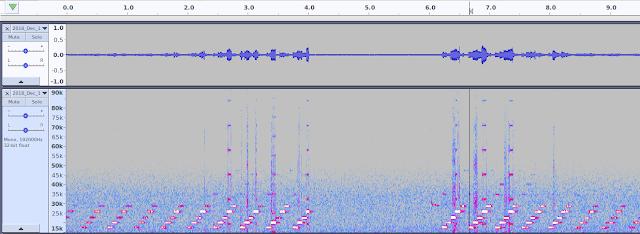 Audacity Dodotronic Ultramic USB microphone ultrasonic bat detector