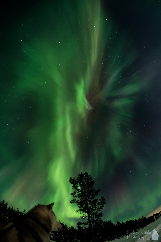 Zorza polarna sfotografowana w noc z 16 na 17.02.2016 r. (Credit: Torben Kühle, Pasvik valley, Norwegia)