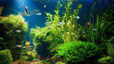 aquascape subur