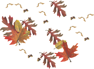 Vector Leaf Clipart 2320
