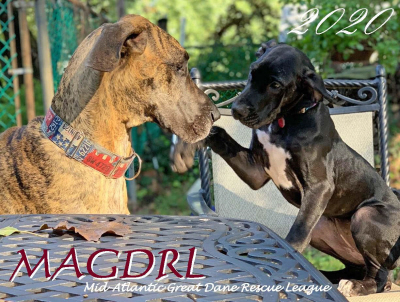 MAGDRL 2020 Great Dane Calendar